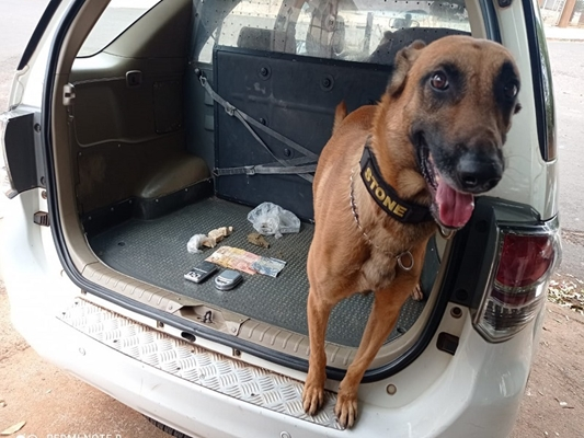 Cão farejador ajuda a prender traficante em Votuporanga